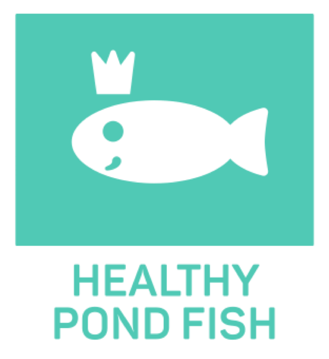 Pikto_healthy_pond_fish